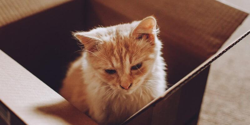 Adopter un chat : 10 choses que vous devez savoir