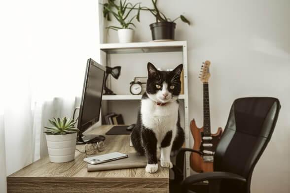 Chat assis sur un bureau