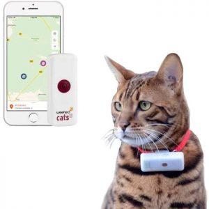 Chat avec un collier gps pour chat Weenect Cats 2