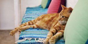 Les avantages d'avoir un chat - Un chat assez allongé sur un canapé