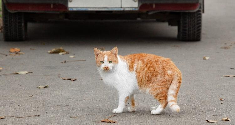 Chat perdu sur la route