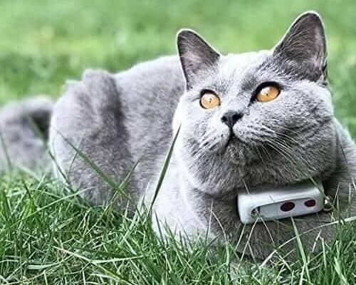 Chat avec un collier gps