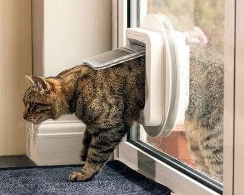 Chat qui entre par la chatière électronique