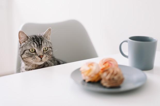 Chat qui monte sur la table