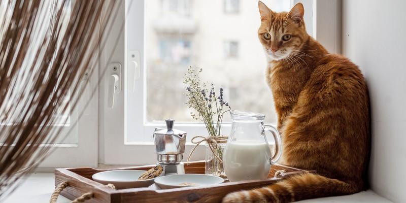 You are currently viewing Comment empêcher un chat de grimper sur les meubles ?