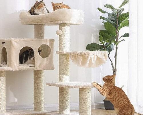Des chats qui s'amusent sur un arbre à chat